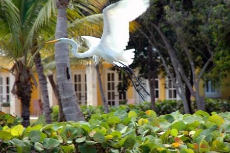 Tortuga Bay, Punta Cana17
