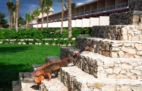Presidente InterContinental Cozumel Resort & Spa16