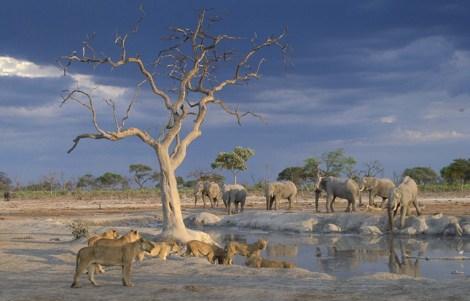 Orient-Express Safaris, Maun - Botswana14