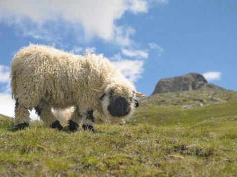 Riffelalp Resort 2222m, Zermatt Switzerland39
