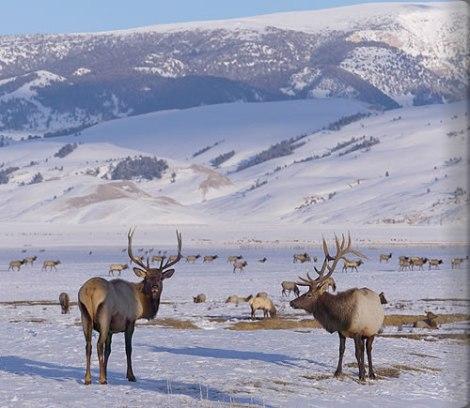 Amangani, Jackson Hole USA32